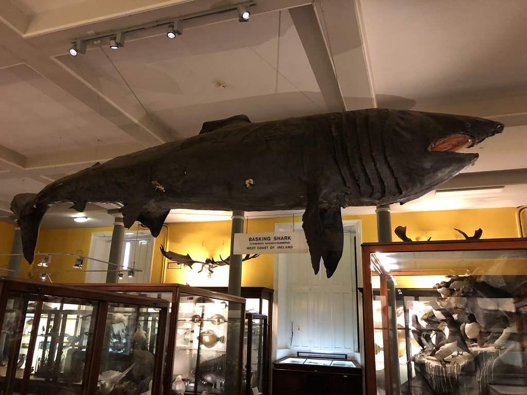 museo natural de historia dublin